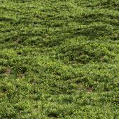 Meadow Lawn Grassland Set 007