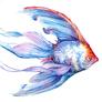 olgafish13