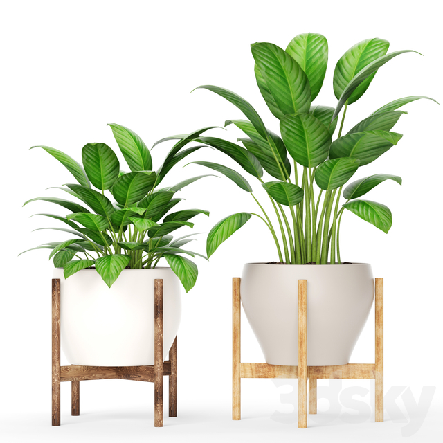 Collection of plants in pots 8