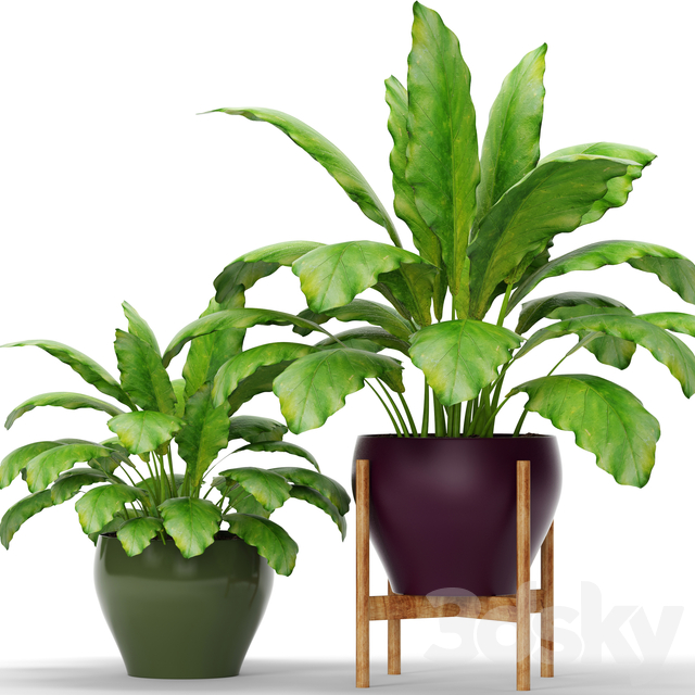 Collection of plants in pots 10