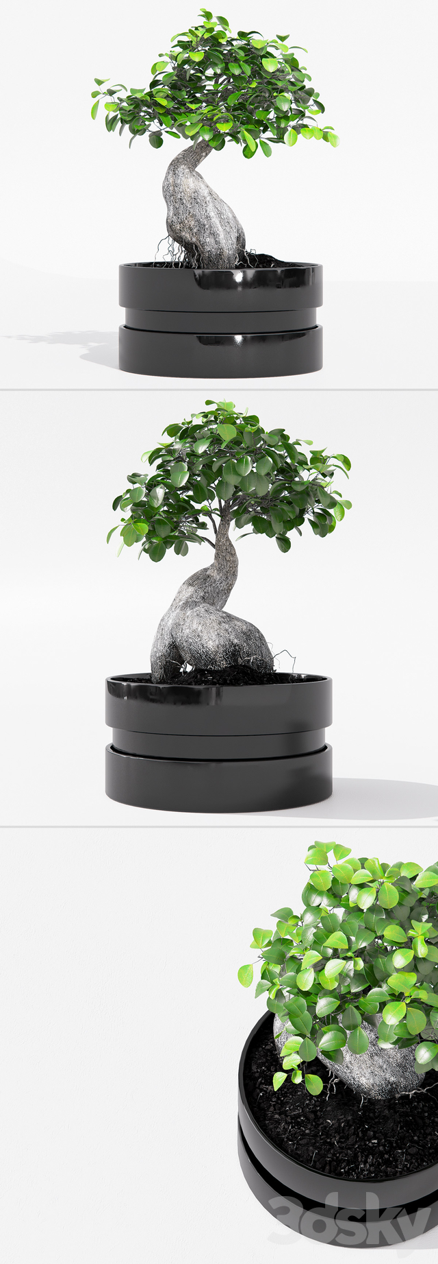 3d Models Indoor Ficus Microcarpa Ginseng With Pot Ikea