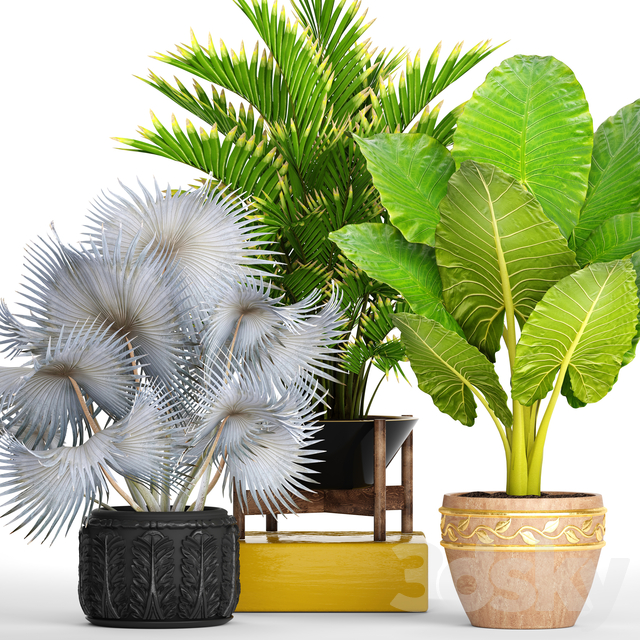 Collection of plants 91.
