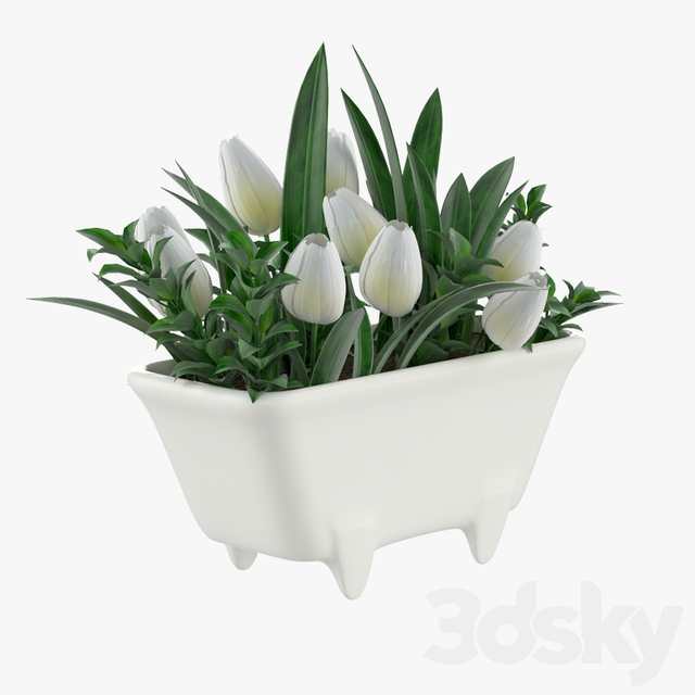 Tulips in the bath