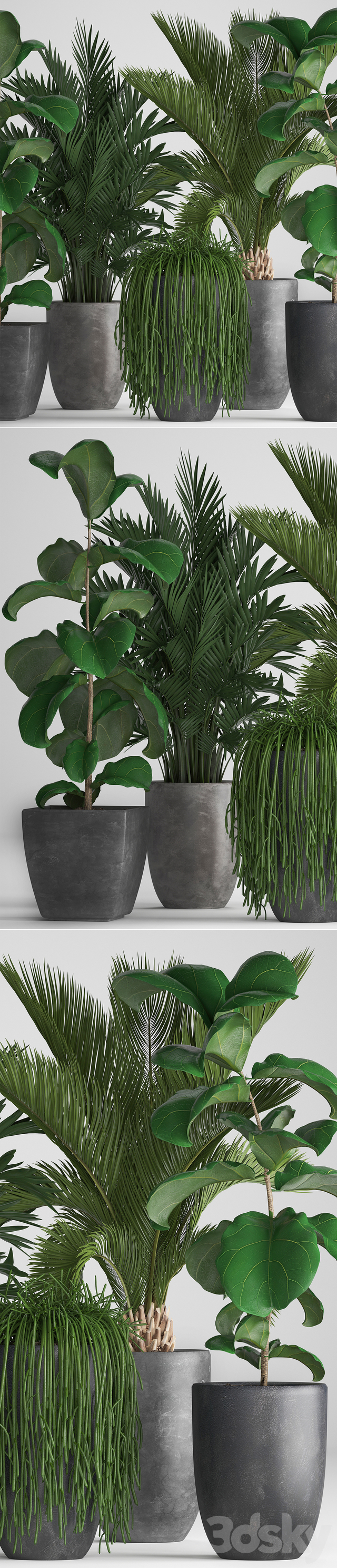 Plant collection 259.