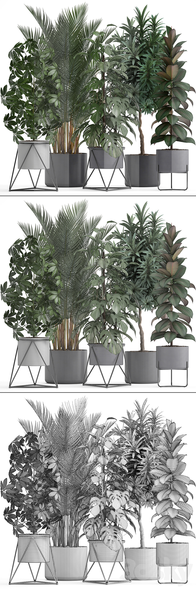 Plant collection 284.