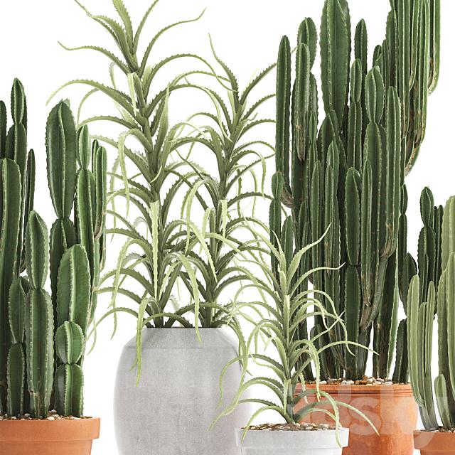 Plant collection 302. Cactus set.