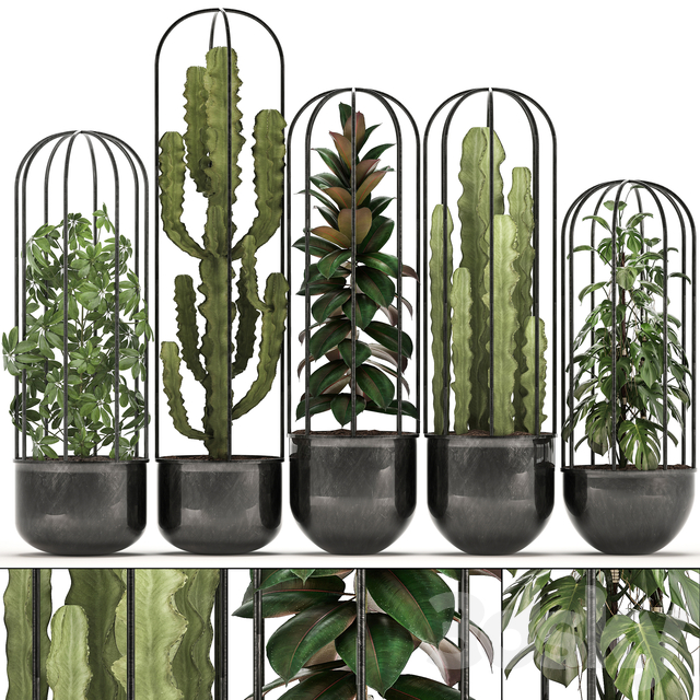Collection of plants 327.