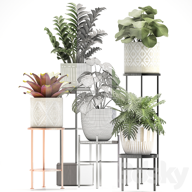 Collection of plants 333.