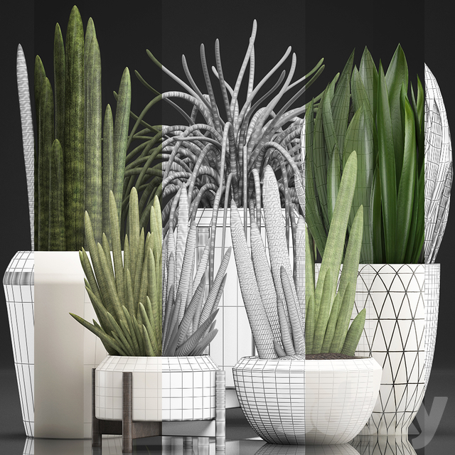 Plant collection 350.