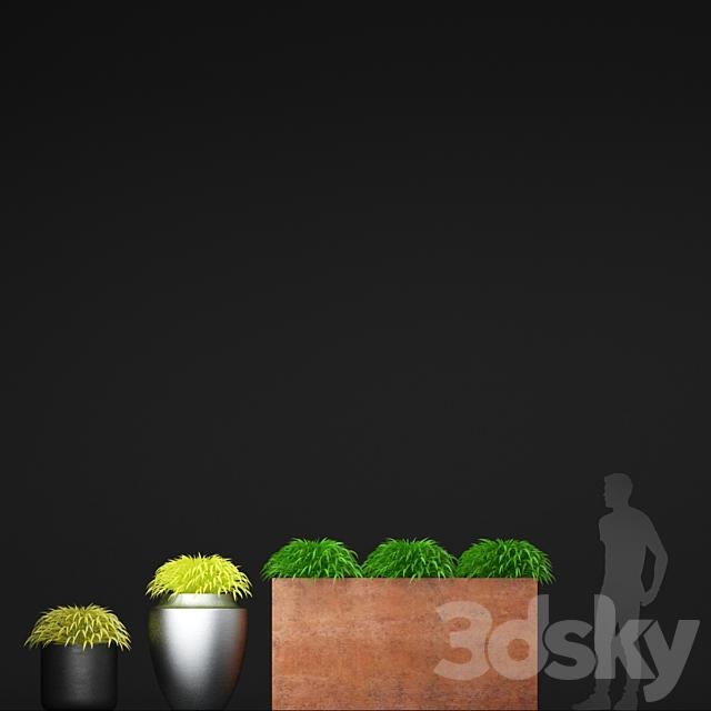 Grass in pots   Hakonechloa planter