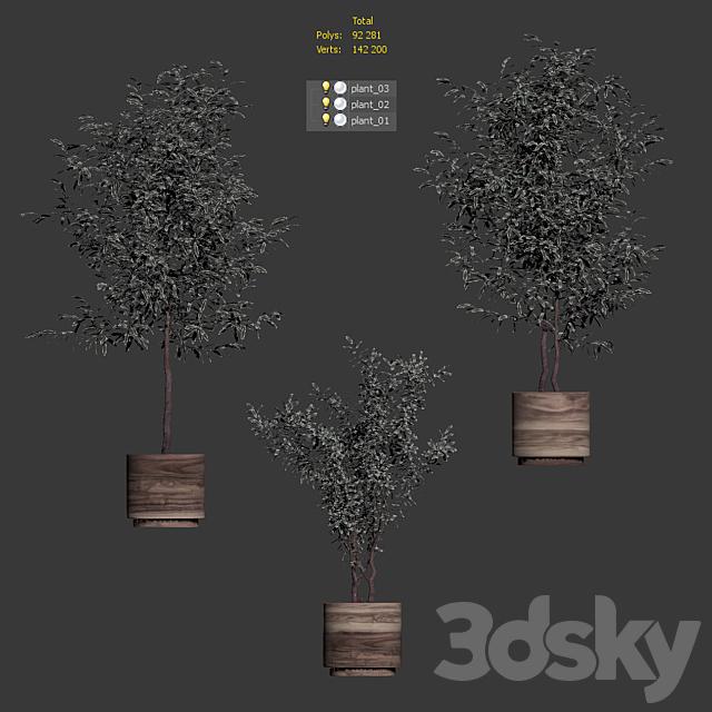 Plants in wooden pots. 3 models