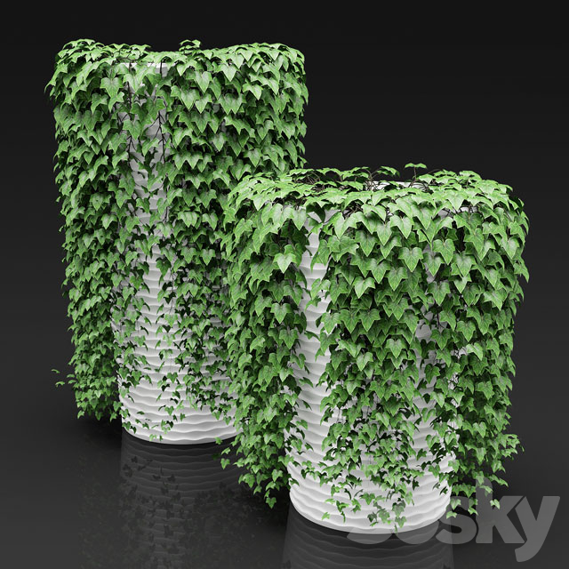 Set of a hanging down plants in a planters   Set of hanging plants in flower pots