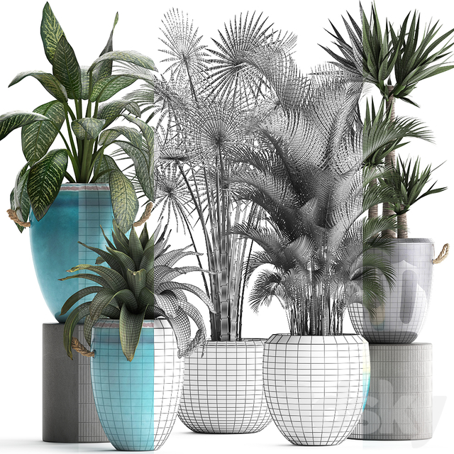 Plant Collection 394.