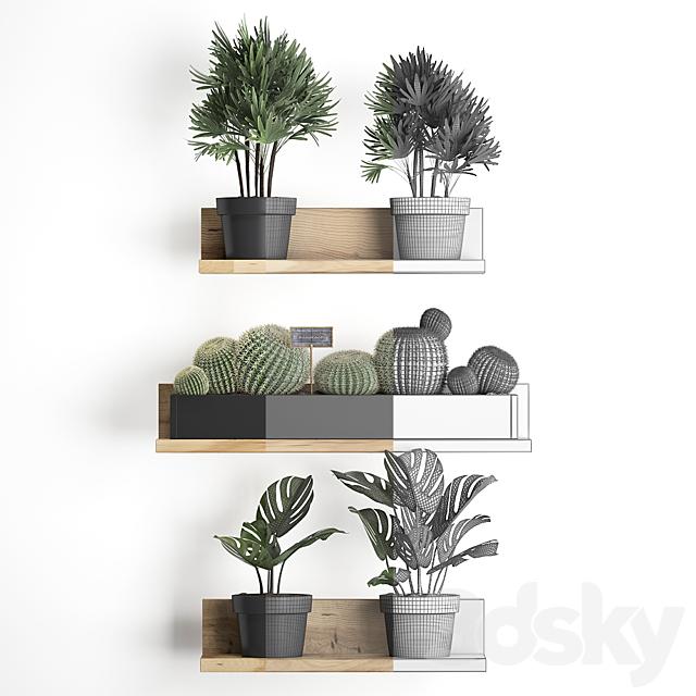 Vertical gardening. 51