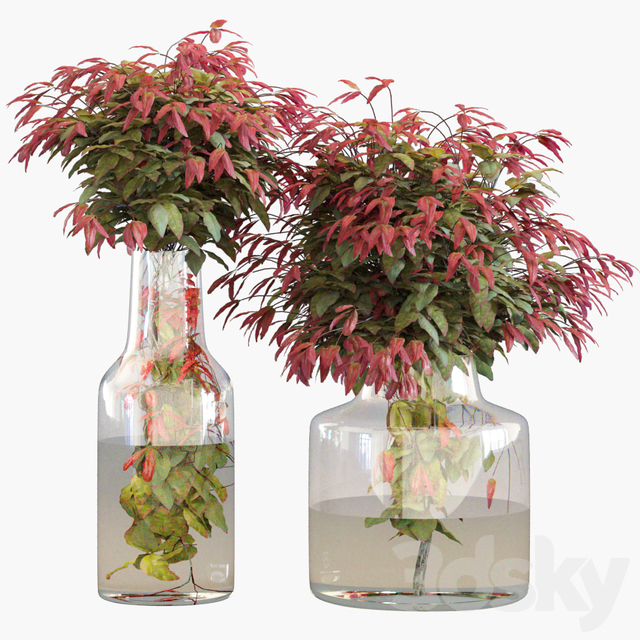 Branches in vases 26: Dwarf sacred bamboo