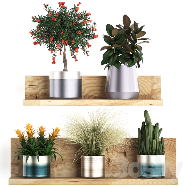 Plant Collection 409.