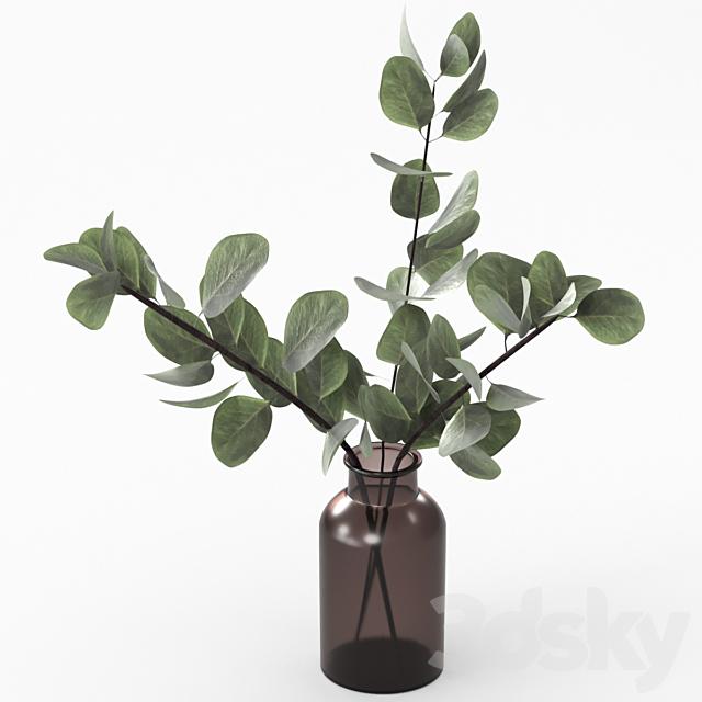 Bouquet of eucalyptus twigs.