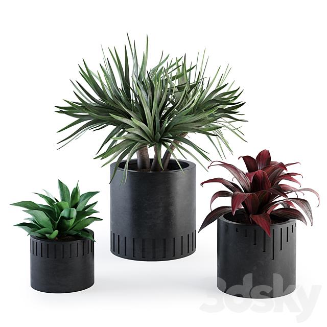 Set of plants w01