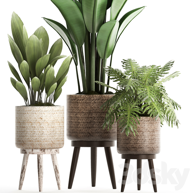Plant Collection 428.