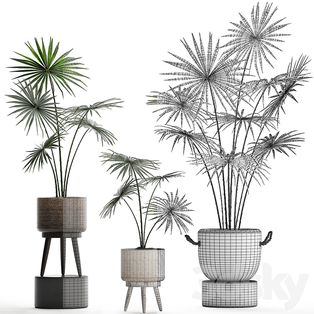 Plant Collection 429.