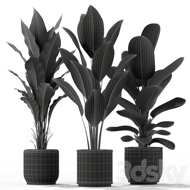 Plants collection 229