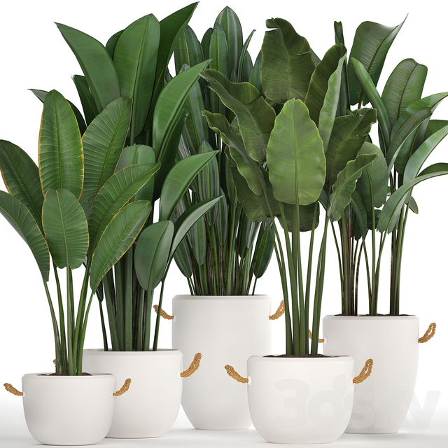 Plant Collection 435.