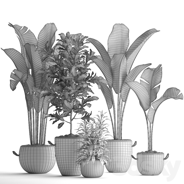 Plant Collection 438.