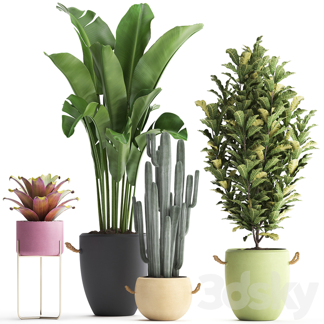 Collection of plants 440.