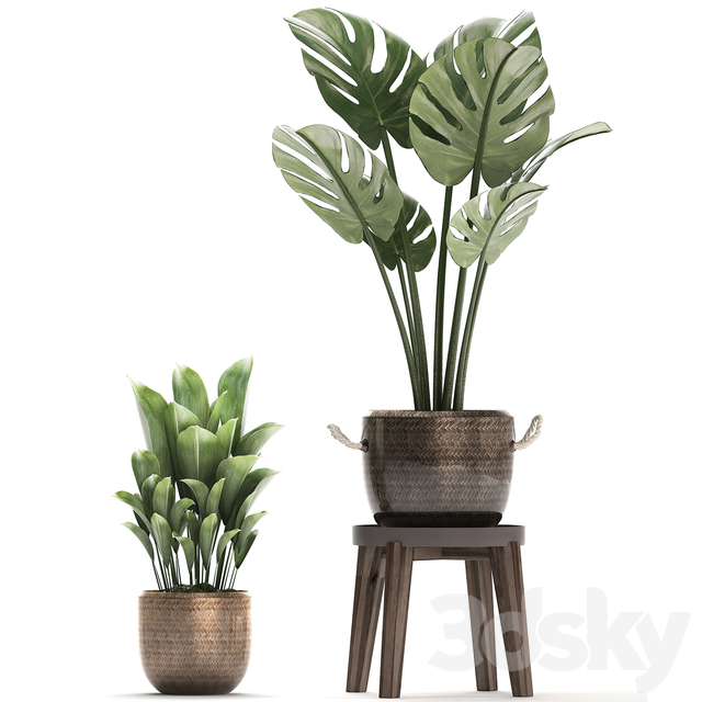 Plant Collection 447.