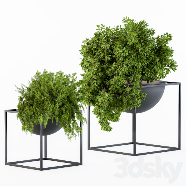Hanging Plants in Round Pot