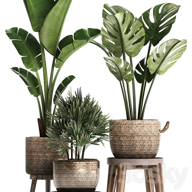 Plant Collection 457.