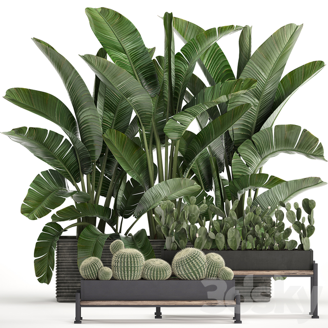Plant Collection 458.