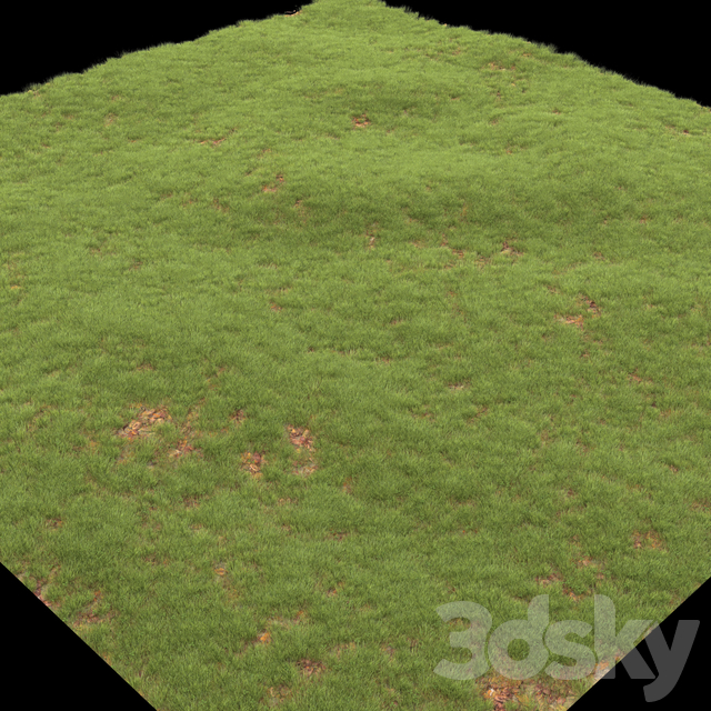 lawn with leaves
