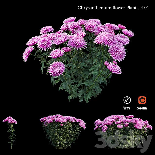 Chrysanthemum flower plant set 01