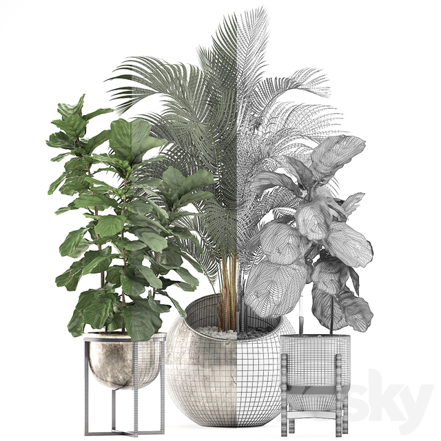 Plant Collection 474.