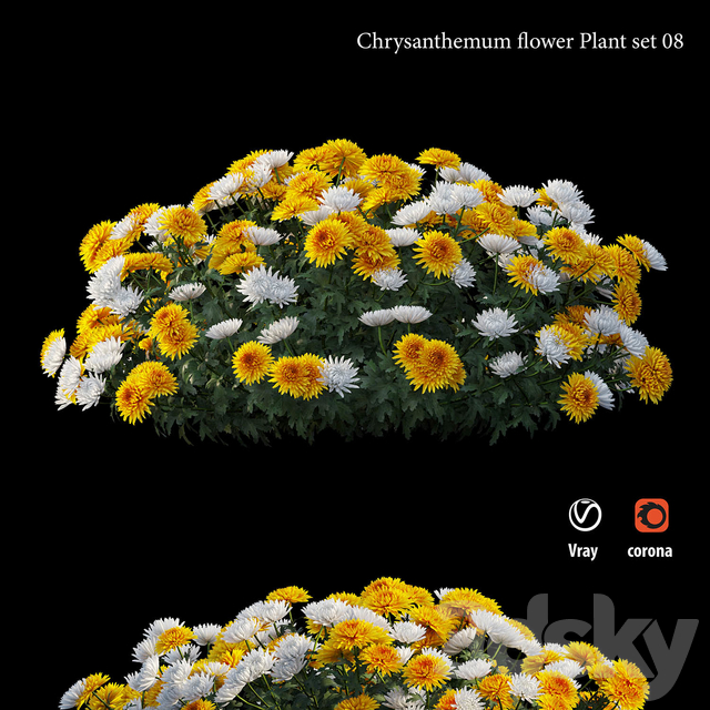 Chrysanthemum flower plant set 08