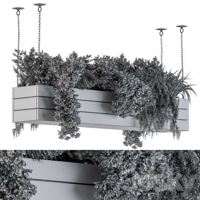 Hanging Plants in Wooden Box