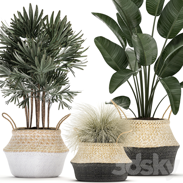 Plant Collection 485.