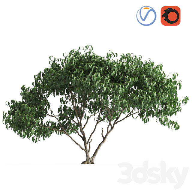 plant 58 E