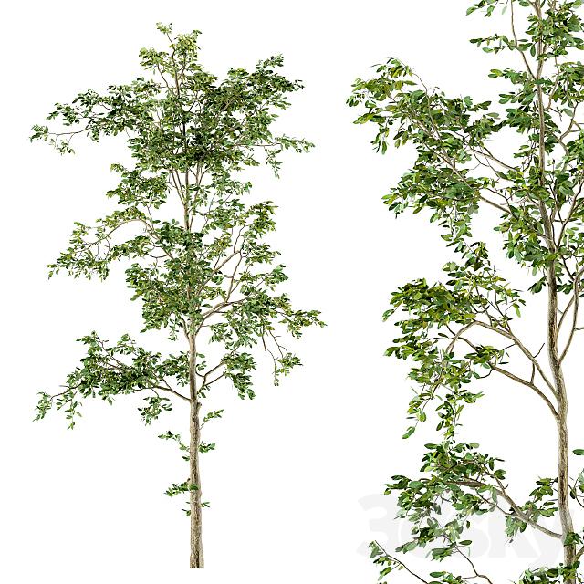 Tree Broadleaf Spring - Set 19