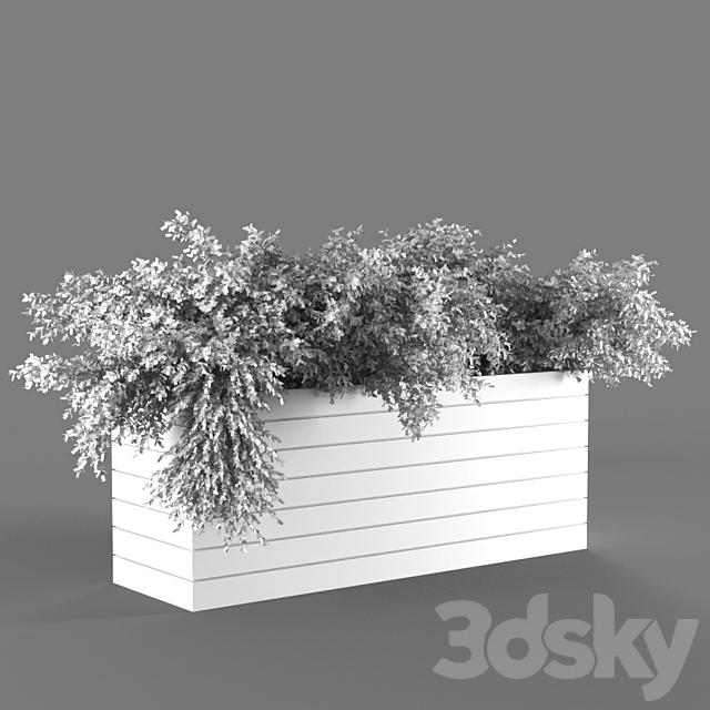plant1147