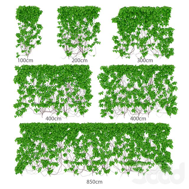 Листья девичьего винограда. 6 размеров