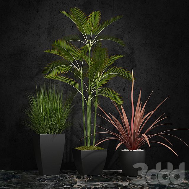 Комнатные растений 06