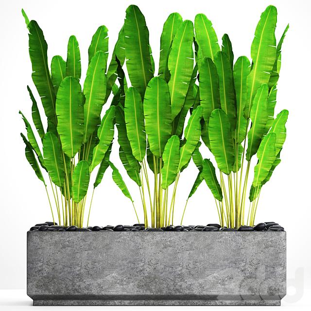 Коллекция растений в горшках 20