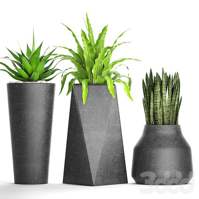 Коллекция растений в горшках 27