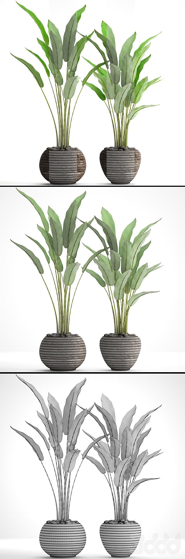 Коллекция растений в горшках 34