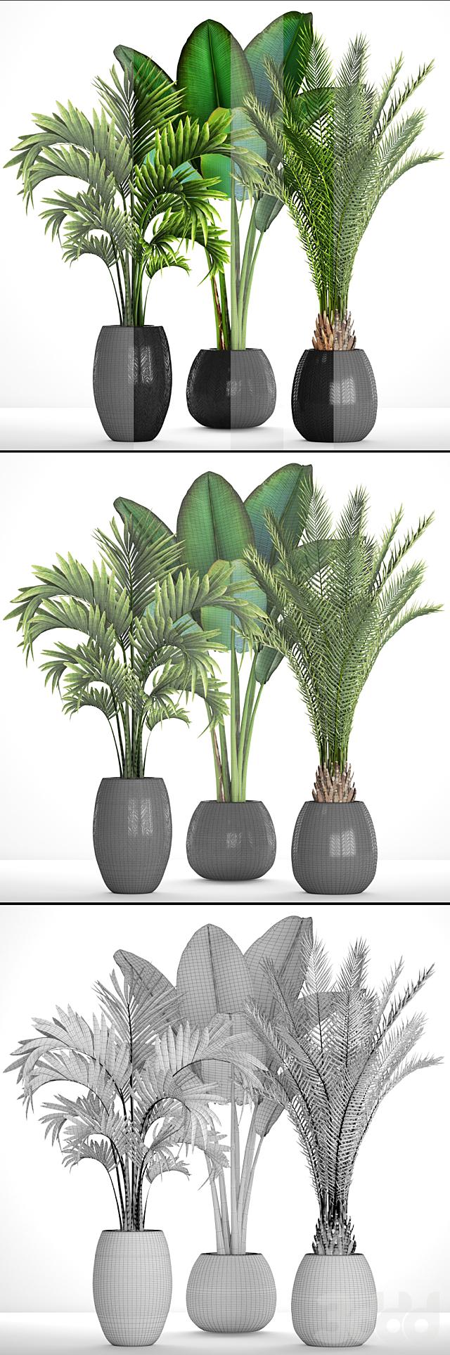 Коллекция растений 93.