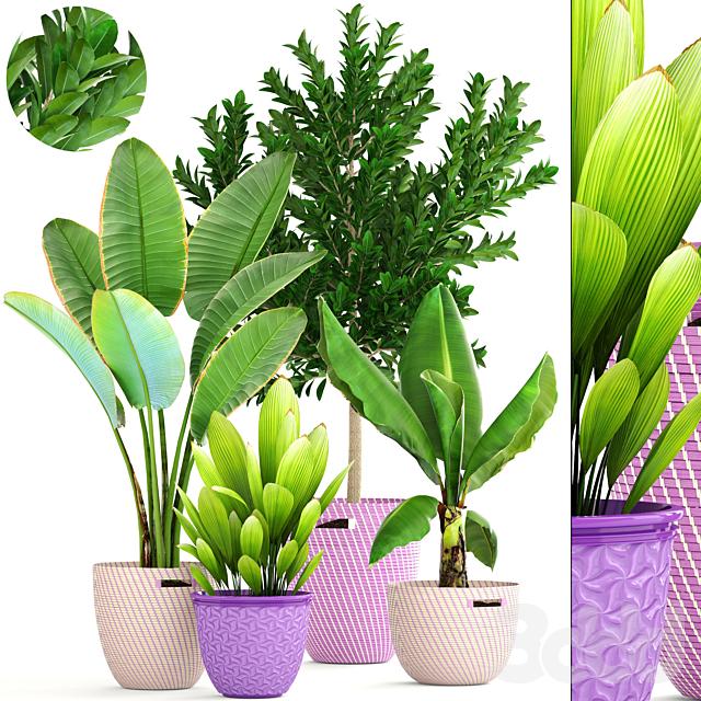 Коллекция растений 159.