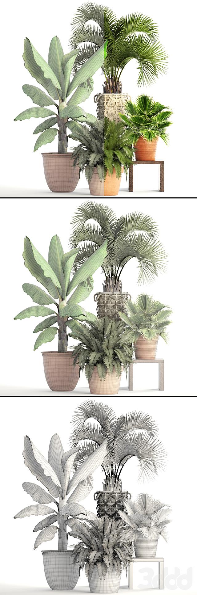 Коллекция растений 163.