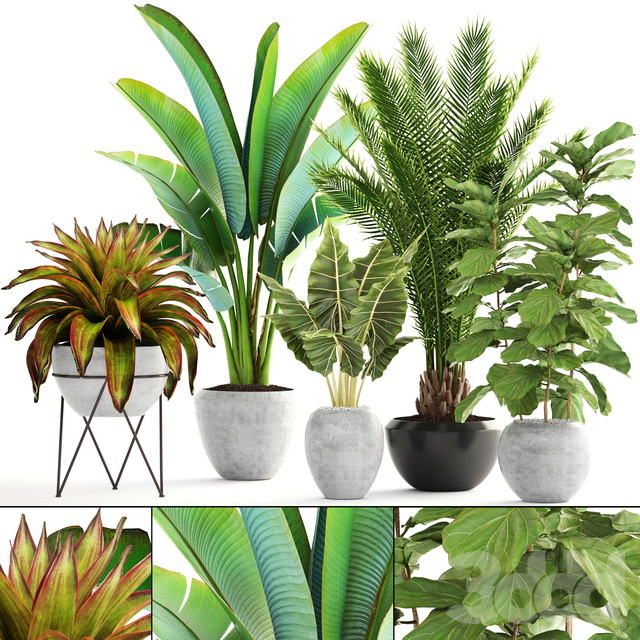 Коллекция растений 175.